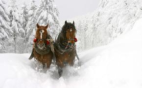 лошади, снег, красиво
