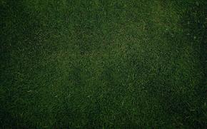prato, verde, erba