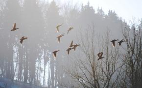 Vgel, Nebel, Morgen, Natur, Frhling