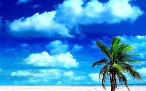 palma, piasek, niebo