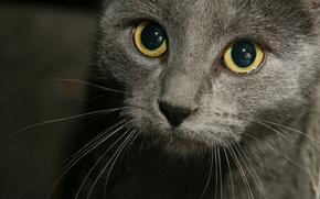 кошки,  кот,  мордашка,  усы,  взгляд,  хорошенький