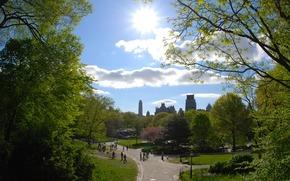 нью йорк, парк, деревья, тропинка, тропинки, город