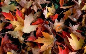 autunno, fogliame, fogliame, rosso, giallo, caduto