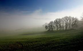 поле,  туман,  деревья