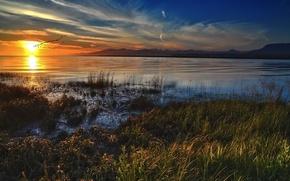 lago, erba, nuvole, Uccelli, sole