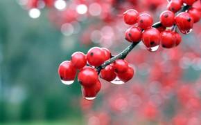 ягоды, макро, роса