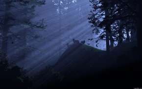 forest, light, rays, Wolves