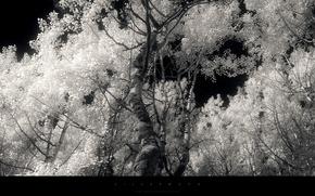 Greg Martin, Aprile, albero, scuro