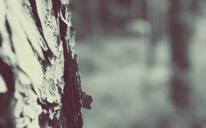 Лес,  дерево,  размытие,  паутина