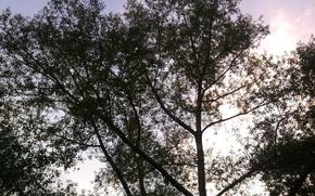 rbol, silueta, puesta del sol