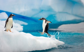 океан, лёд, пара, пингвины, прыжок, капли, брызги, лапы, полёт, движение, льдина