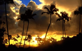 Palms, clouds, sun, sunset