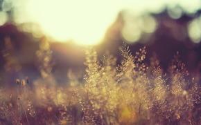 natura, rolina, pole, wiato, dzie, soce