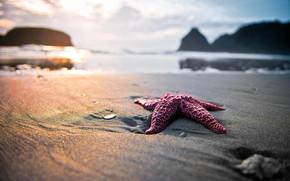 性质, 海滩, 沙, 明星