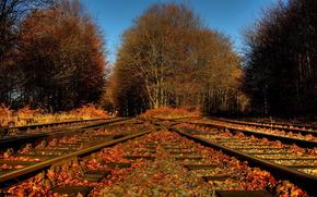 automne, chemin de fer, feuillage, Nature