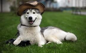 пёс,  фотик,  шляпа