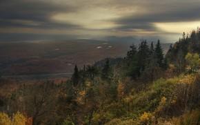 autumn, forest, melancholy