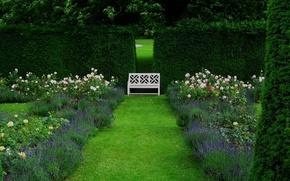 Англия,  сад,  скамейка,  скамья,  цветы,  дорожка,  зелень,  лето,  розы,  лаванда,  деревья