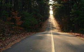 foresta, strada, alberi, fogliame