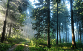 nature, forest, Trees, rays, light