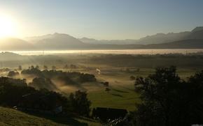 greens, fog, morning
