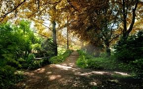лес,  парк,  дорожка,  лавка,  лето,  зелень