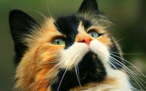 кот,  пятна,  мордочка