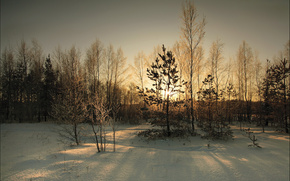 winter, snow, Trees, sun, sunset