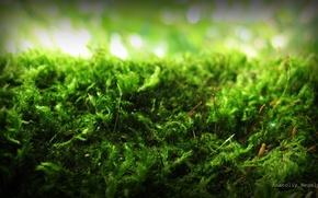 Мох,  зелень,  дерево