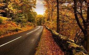 autunno, strada, girare, confine