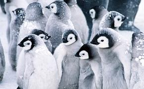 企鹅, Linux的, 年轻
