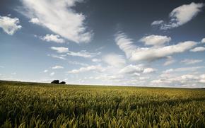 natura, estate, cielo, nuvole, campo, spighette