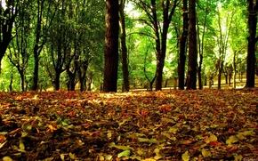 bosque, deja, otoo