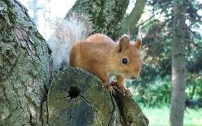 squirrel, tree, park