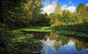 речка,  деревья,  вода