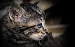 chat, voir, il, oue, moustache
