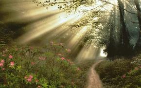 лес,  деревья,  тропинка,  кусты,  цветы,  лучи