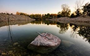 камень,  ветка,  отражение,  лес