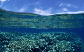 oceano, cu, coral, obloka