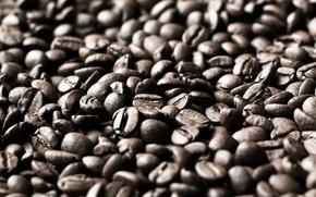 зерна,  кофе,  фон,  текстура,  coffee
