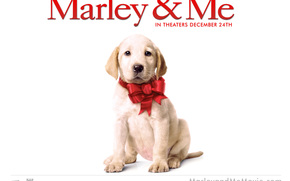 Марли и я, Marley & Me, film, movies
