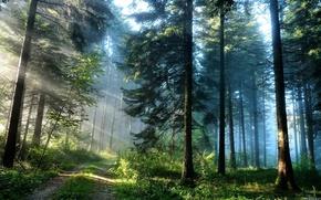 foresta, strada, luce