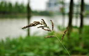 macro, blade, grass, ear, greens