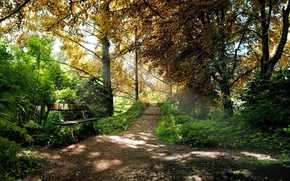 лес,  парк,  тропинка,  скамейка,  деревья,  лучи