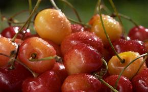 черешня,  в каплях,  воды,  сочная,  ягода