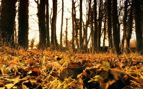 Осень,  листва,  листопад,  деревья