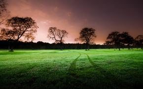 природа,  поле,  зеленое,  след,  вечер,  деревья