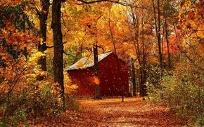 Золотая осень,  домик,  листопад