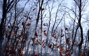 Trees, leaves, autumn, smoke