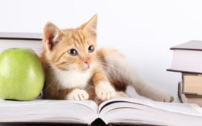 cat, apple, Books